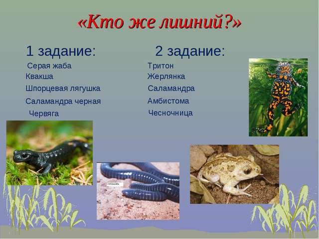 «Кто же лишний?» 1 задание: 2 задание: Квакша Шпорцевая лягушка Саламандра ч...