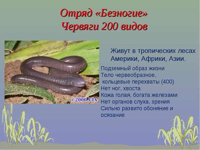 Отряд «Безногие» Червяги 200 видов Живут в тропических лесах Америки, Африки,...
