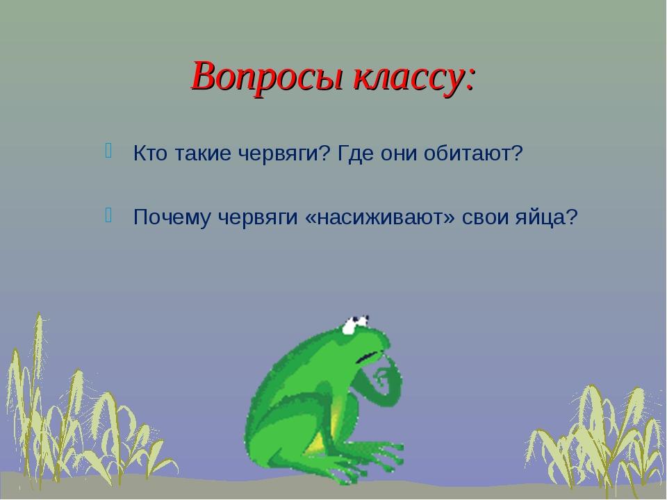 Вопросы классу: Кто такие червяги? Где они обитают? Почему червяги «насиживаю...