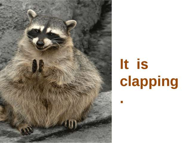 It is clapping.