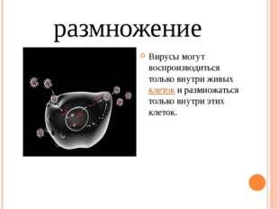 размножение Вирусы могут воспроизводиться только внутри живых клеток и размно