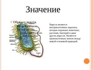 Значение Вирусы являются внутриклеточные паразиты, которые поражают животных,