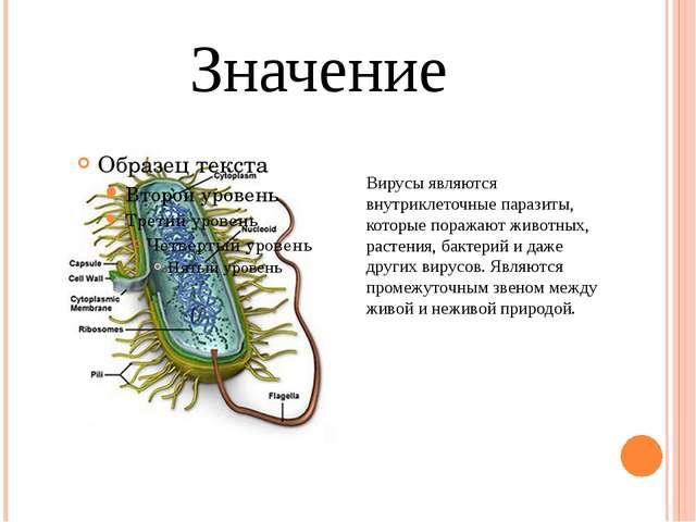 Значение Вирусы являются внутриклеточные паразиты, которые поражают животных,...