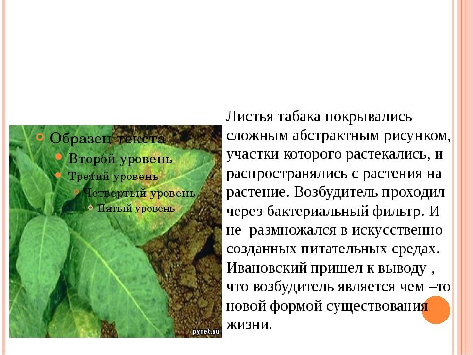 Листья табака покрывались сложным абстрактным рисунком, участки которого раст...