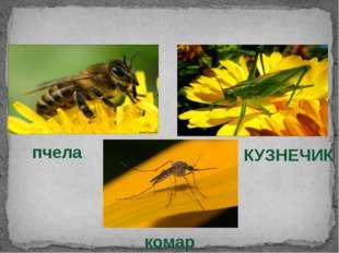 НАСЕКОМЫЕ комар пчела КУЗНЕЧИК