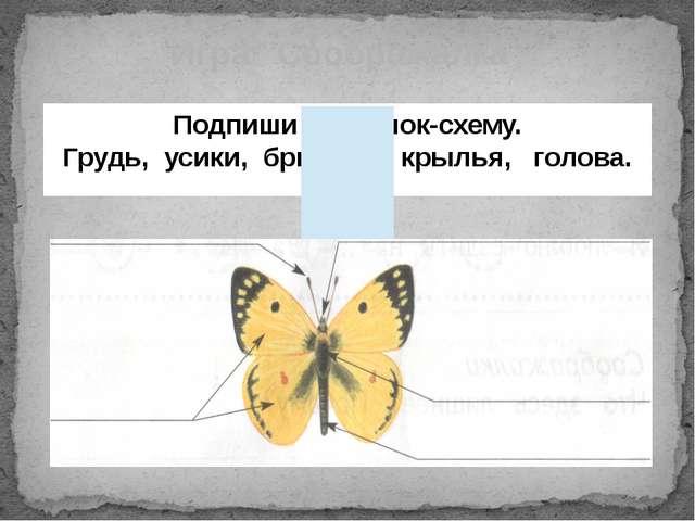 """Игра """"Соображалка"""" Подпиши рисунок-схему. Грудь, усики, брюшко, крылья, голова."""