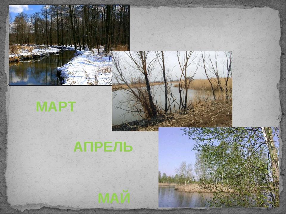 МАРТ АПРЕЛЬ МАЙ весна