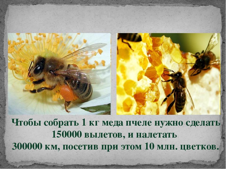 Чтобы собрать 1 кг меда пчеле нужно сделать 150000 вылетов, и налетать 30000...