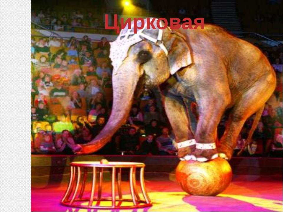 Цирковая