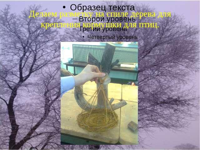 Делаем разметку на спиле дерева для крепления кормушки для птиц.