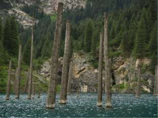 Стволы деревьев возвышаются над водной гладью, словно большие мачты от потеря