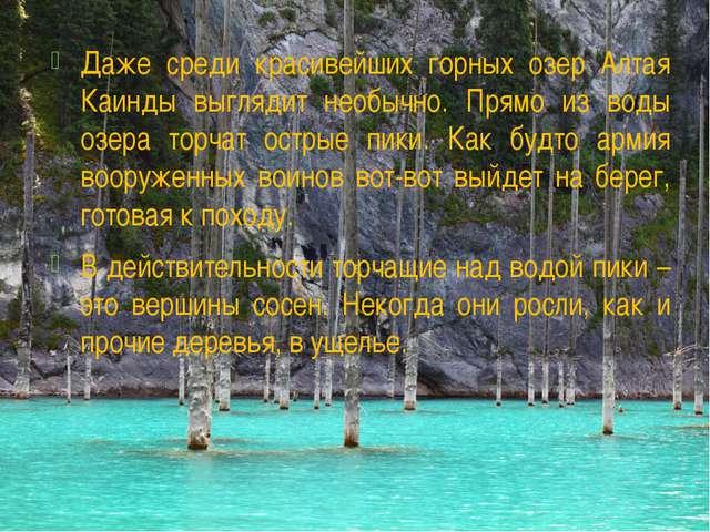 Даже среди красивейших горных озер Алтая Каинды выглядит необычно. Прямо из в...