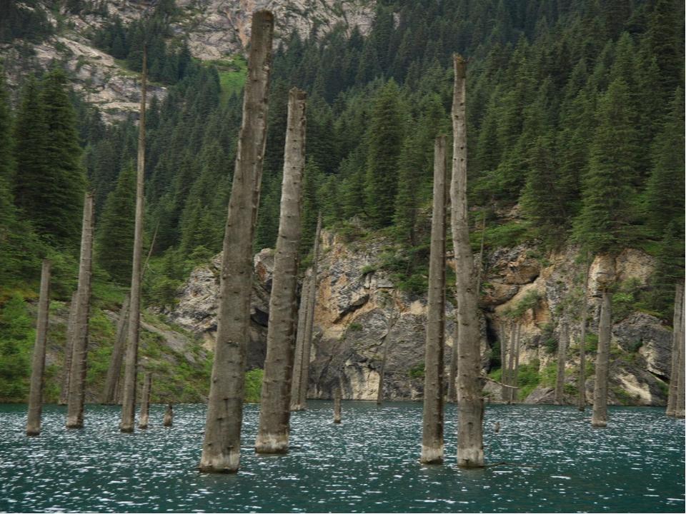 Стволы деревьев возвышаются над водной гладью, словно большие мачты от потеря...