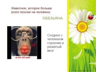 Животное, которое больше всего похоже на человека: ОБЕЗЬЯНА Сходное с челове