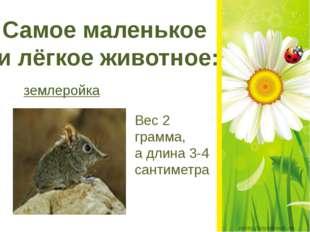 Самое маленькое и лёгкое животное: землеройка Вес 2 грамма, а длина 3-4 сант
