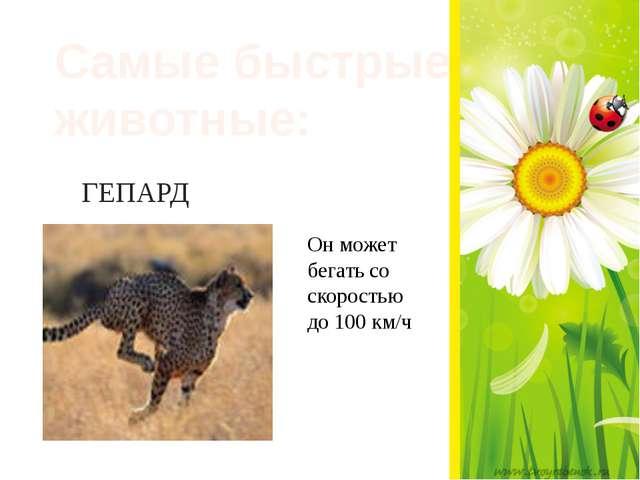 ГЕПАРД Самые быстрые животные: Он может бегать со скоростью до 100 км/ч