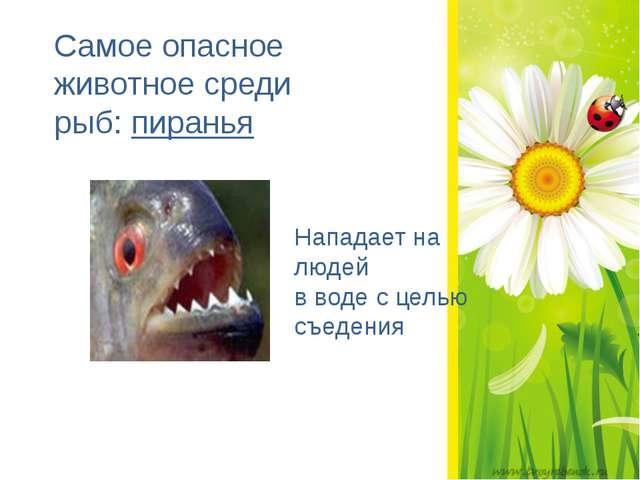 Самое опасное животное среди рыб: пиранья Нападает на людей в воде с целью...