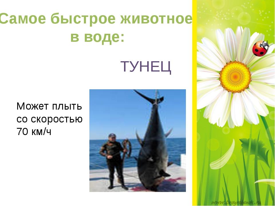Самое быстрое животное в воде: ТУНЕЦ Может плыть со скоростью 70 км/ч