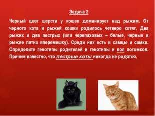 Задача 2 Черный цвет шерсти у кошек доминирует над рыжим. От черного кота и р