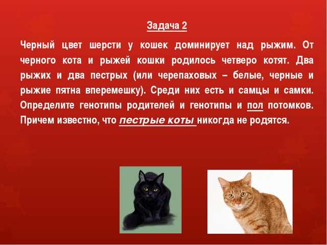 Задача 2 Черный цвет шерсти у кошек доминирует над рыжим. От черного кота и р...