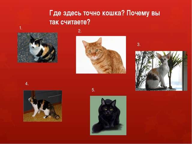 1. 2. 3. 4. 5. Где здесь точно кошка? Почему вы так считаете?