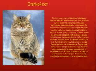 Степной кот Степная кошка питается мышами, крысами и другими мелкими млекопит