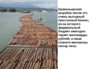 Браконьерская вырубка лесов это очень выгодный преступный бизнес, из-за котор
