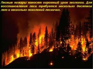 Лесные пожары наносят огромный урон экологии. Для восстановления леса требует