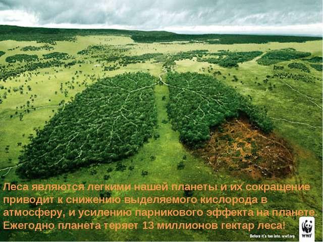 Леса являются легкими нашей планеты и их сокращение приводит к снижению выдел...