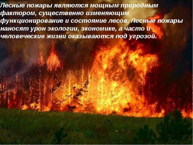 Лесные пожары являются мощным природным фактором, существенно изменяющим функ...