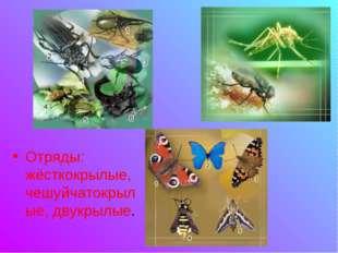 Отряды: жёсткокрылые, чешуйчатокрылые, двукрылые.