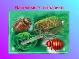 Насекомые -паразиты