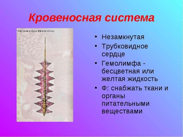 Кровеносная система Незамкнутая Трубковидное сердце Гемолимфа - бесцветная ил...