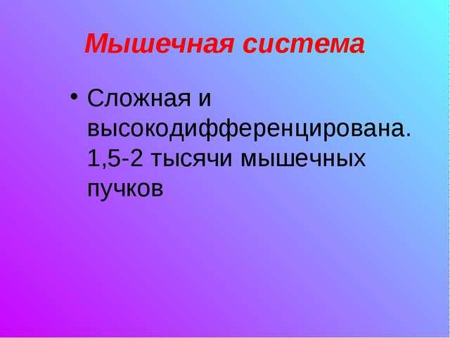 Мышечная система Сложная и высокодифференцирована. 1,5-2 тысячи мышечных пучков