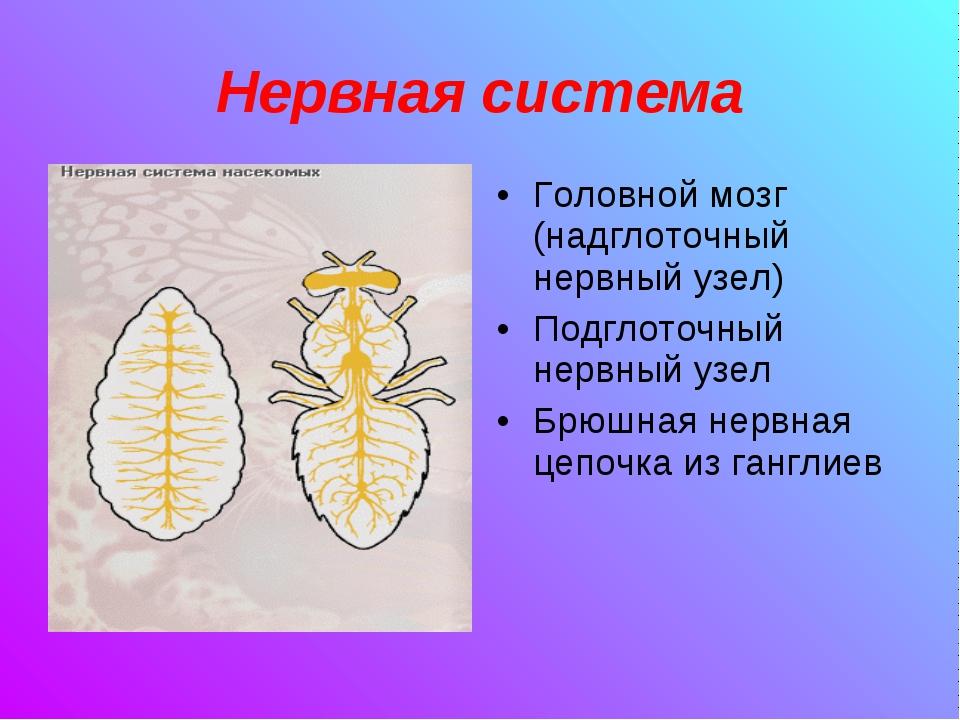 Нервная система Головной мозг (надглоточный нервный узел) Подглоточный нервны...