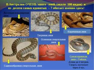 В Австралии ОЧЕНЬ много змей, (около 100 видов) и из десяти самых ядовитых –