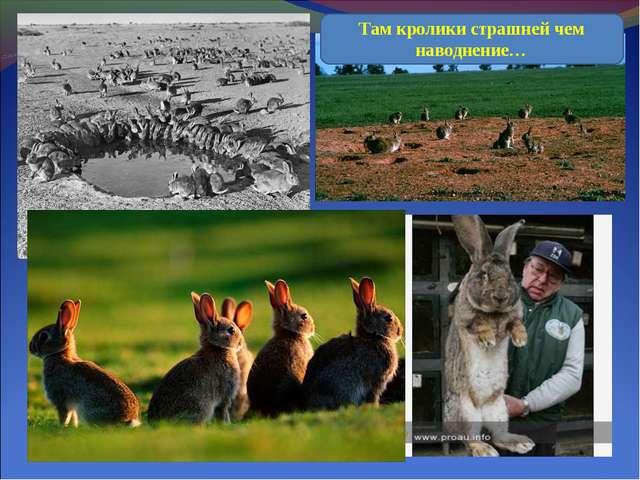 Там кролики страшней чем наводнение…