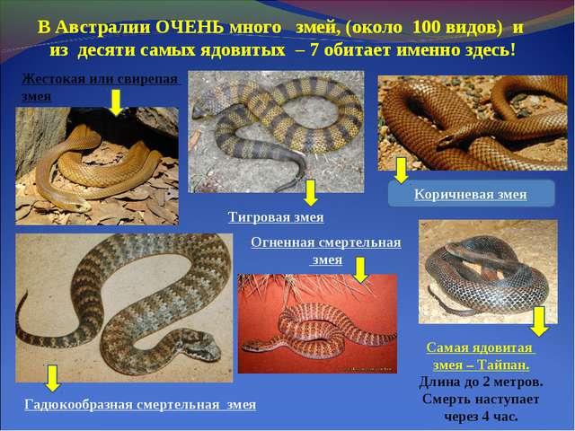 В Австралии ОЧЕНЬ много змей, (около 100 видов) и из десяти самых ядовитых –...