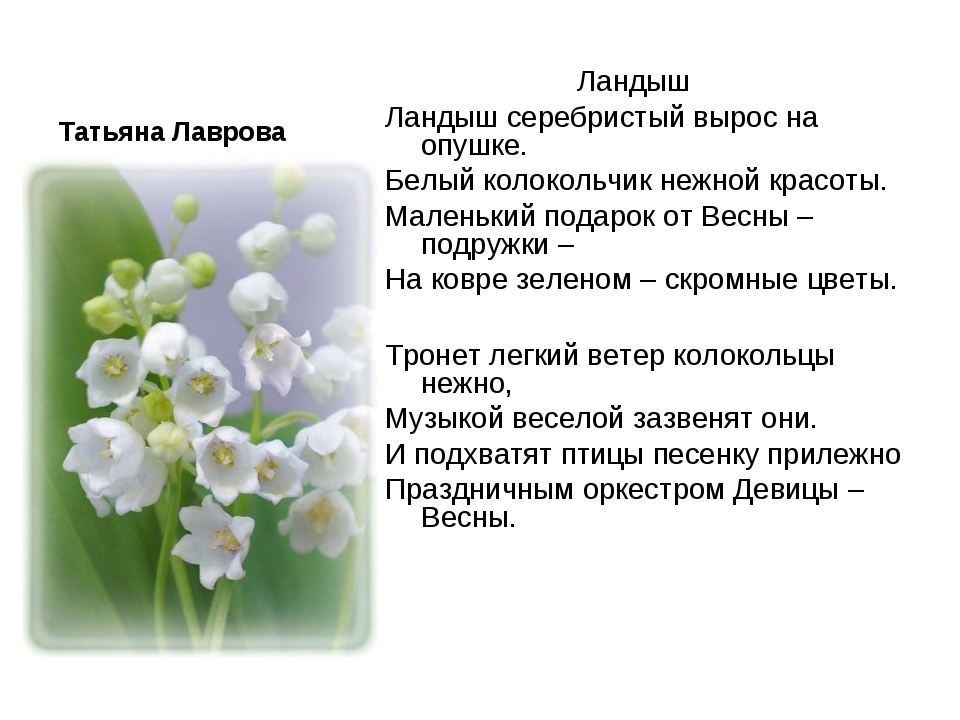 Татьяна Лаврова Ландыш Ландыш серебристый вырос на опушке. Белый колокольч...