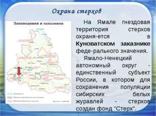 Охрана стерхов На Ямале гнездовая территория стерхов охраняется в Куноватс