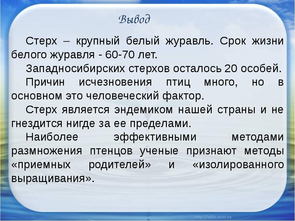 Вывод Стерх – крупный белый журавль. Срок жизни белого журавля - 60-70 лет....