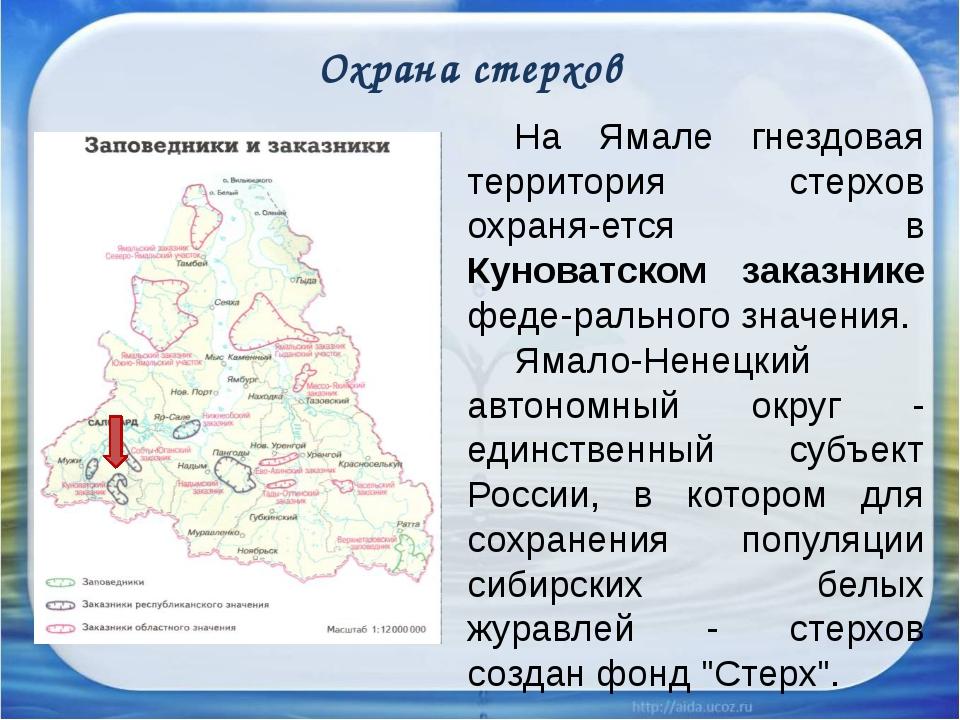 Охрана стерхов На Ямале гнездовая территория стерхов охраняется в Куноватс...