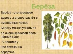 Берёза Берёза –это красивое дерево ,которое растёт в смешанных лесах. Берёзу