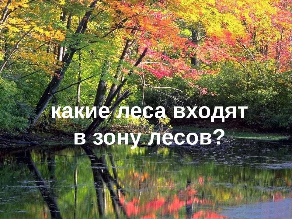 какие леса входят в зону лесов?