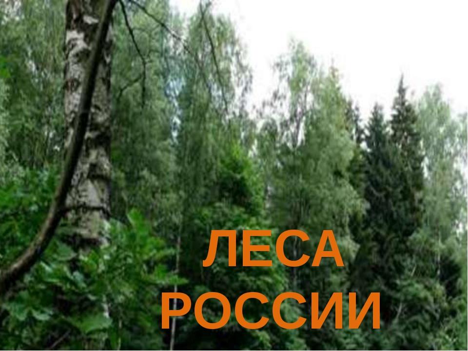 ЛЕСА РОССИИ