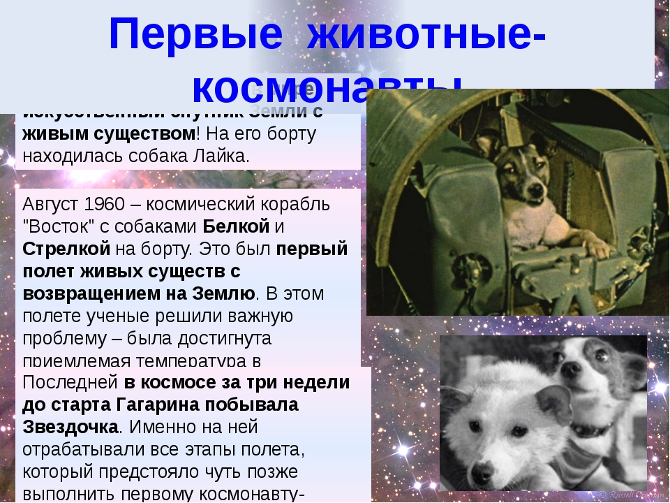 3 ноября 1957 –- первый в мире искусственный спутник Земли с живым существом!...