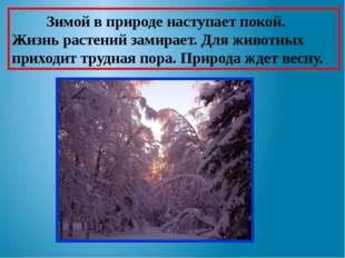 Зимой в природе наступает покой. Жизнь растений замирает. Для животных прихо