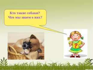 Кто такие собаки? Что мы знаем о них?