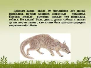 Давным–давно, около 40 миллионов лет назад, появились предки хищных животных