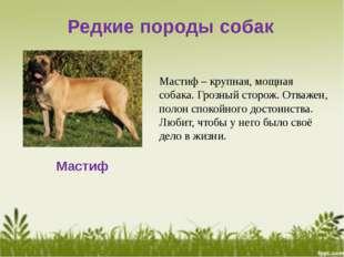 Редкие породы собак Мастиф Мастиф – крупная, мощная собака. Грозный сторож. О